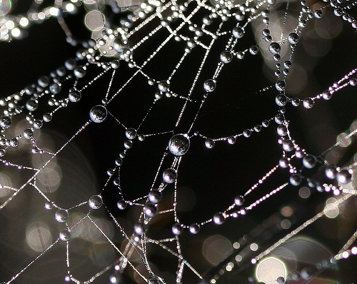 Oh What a Tangled Web